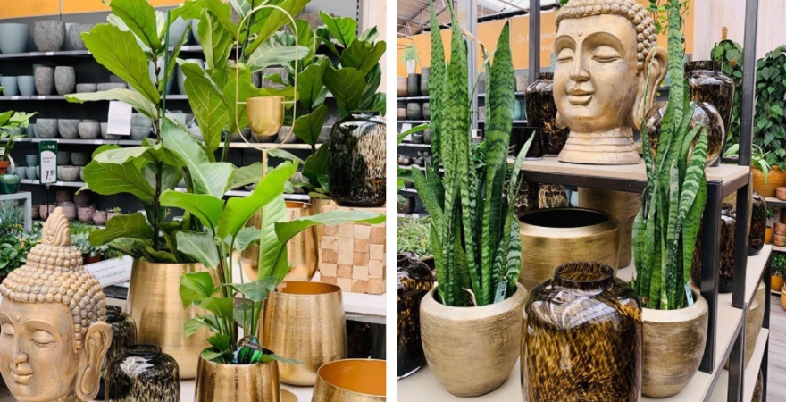De mooiste planten vind je bij Toptuincentrum.nl | Bezoek de webshop! | Toptuincentrum.nl
