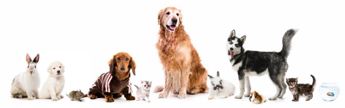 Dierenafdeling bij Toptuincentrum - Alles voor jouw dier