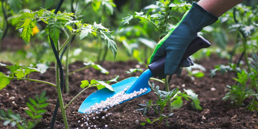 Gezonden planten met meststof | Toptuincentrum.nl