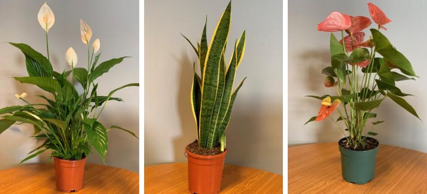 Kamerplanten vind je bij Toptuincentrum.nl | Gemakkelijk en veilig online bestellen