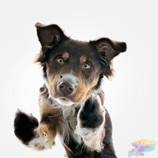De hond is een trouwe viervoeter