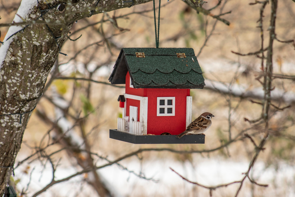 vogelvoer-vogelhuisje-toptuincentrum