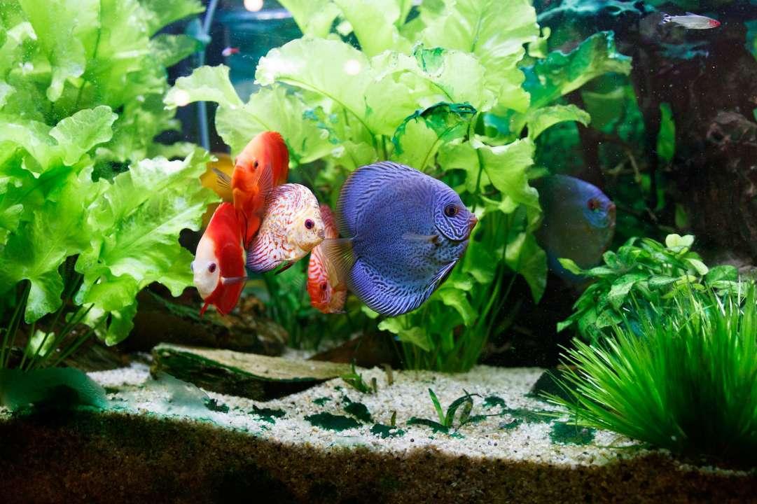 Aquarium met vissen en planten