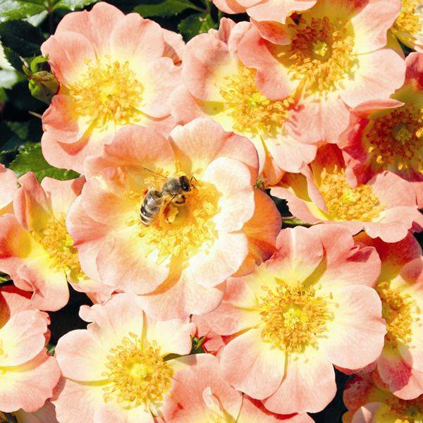 Bloembollen en zaden die bijen aantrekken