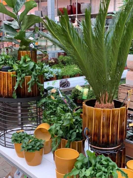 Oranje buiten potterie om uw tuin mee op te vrolijken