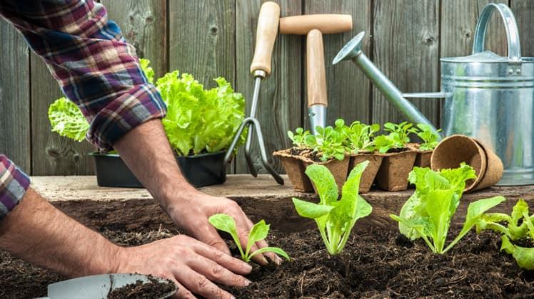 Tuingereedschap om het tuinieren makkelijker te maken