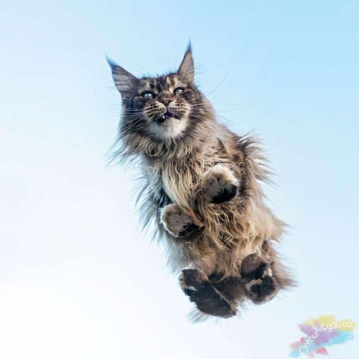 Mooie kat op doorzichtige ondergrond