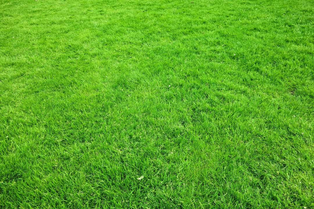Groen gazon met graszaad